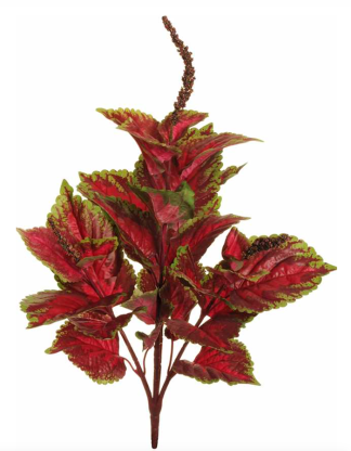 NEW COLEUS BUSH