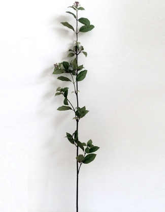 CHERRY WITH LEAVES