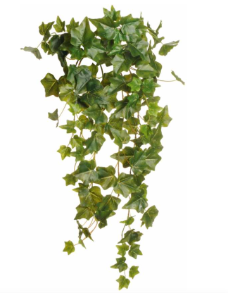 IVY HANGING BUSH