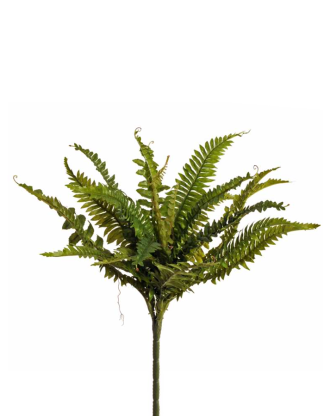 BOSTON FERN LEAVES