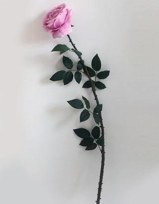 ROSA GIGANTE CON SPINE