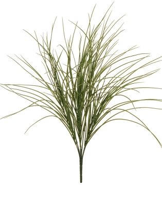 GRASS BUSH