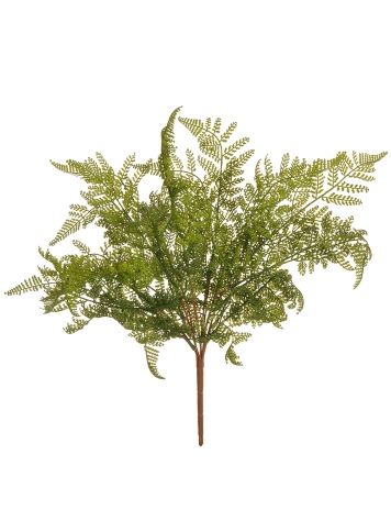 FERN BUSH NATURAL TOUCH