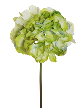 HYDRANGEA SOFT CANDY COLLECTION