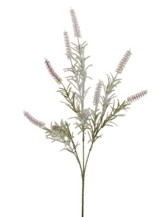 BUTTERFLY PLANT SPRAY