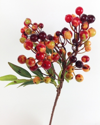 POTHINIA BERRIES