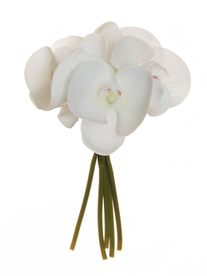 PHALENOPSIS REAL TOUCH BUNDLE