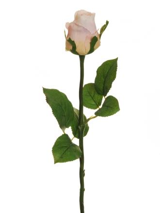 GORGEOUS ROSE BUD