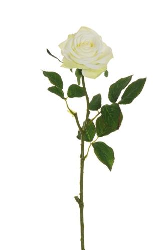 ECUADOR ROSE WHITE