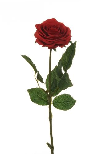 ECUADOR ROSE RED