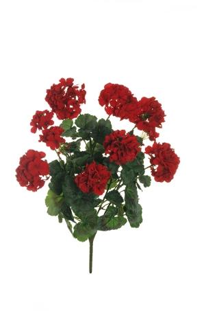 GERANIUM RED X6